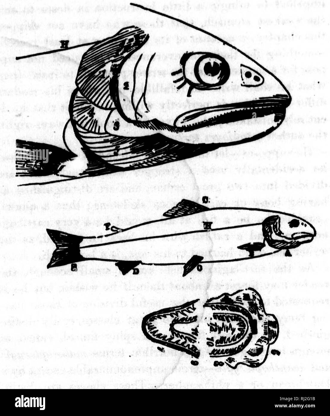 hight resolution of  the game fish of the northern states and british provinces microform with an account of the salmon and sea trout fishing of canada and new brunswick