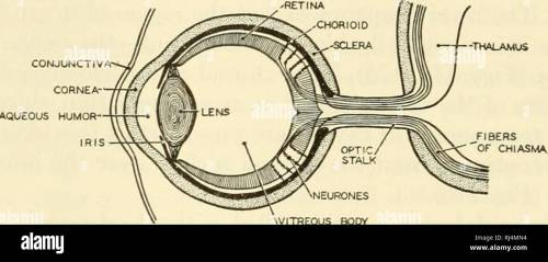 small resolution of sections of successive stages in the development of the lens of the eye from the first thickening of the ectoderm ec to the complete separation of