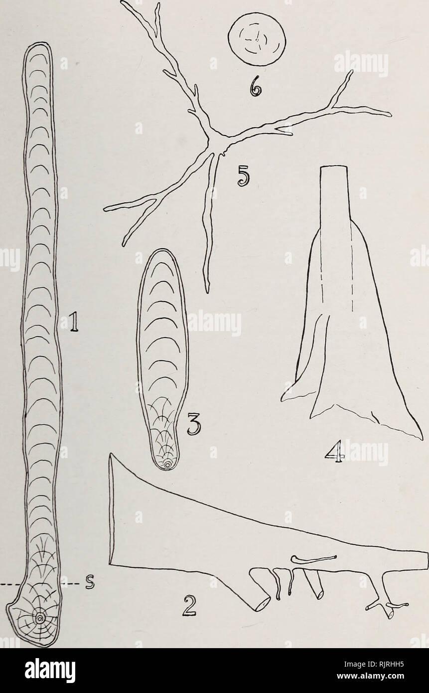 medium resolution of austkalian rain forest trees 11 fig 2 1 vertical transverse section of buttress of tarrietia argyrodendron var trifoliolata x
