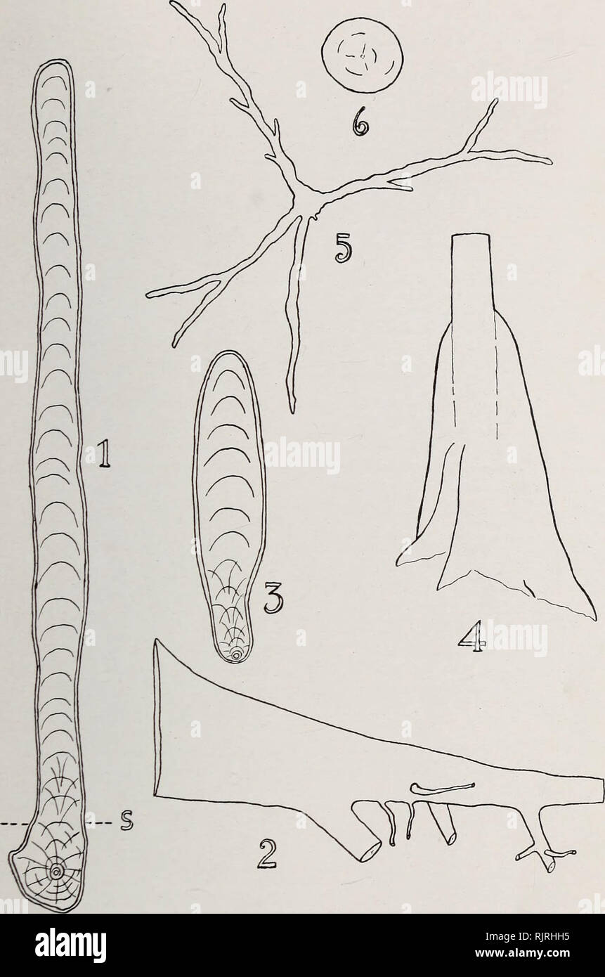 hight resolution of austkalian rain forest trees 11 fig 2 1 vertical transverse section of buttress of tarrietia argyrodendron var trifoliolata x