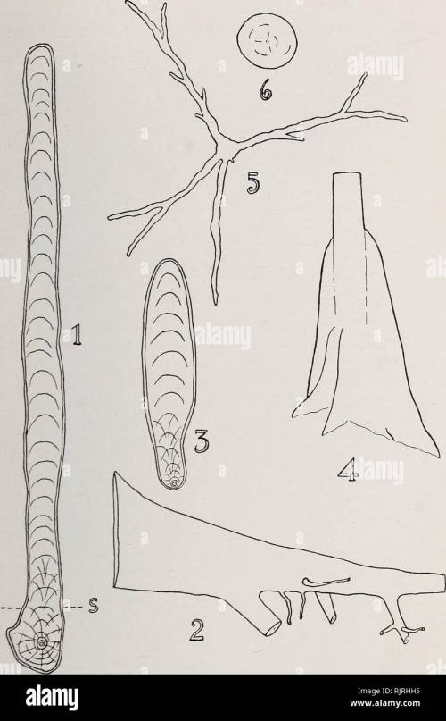 small resolution of austkalian rain forest trees 11 fig 2 1 vertical transverse section of buttress of tarrietia argyrodendron var trifoliolata x