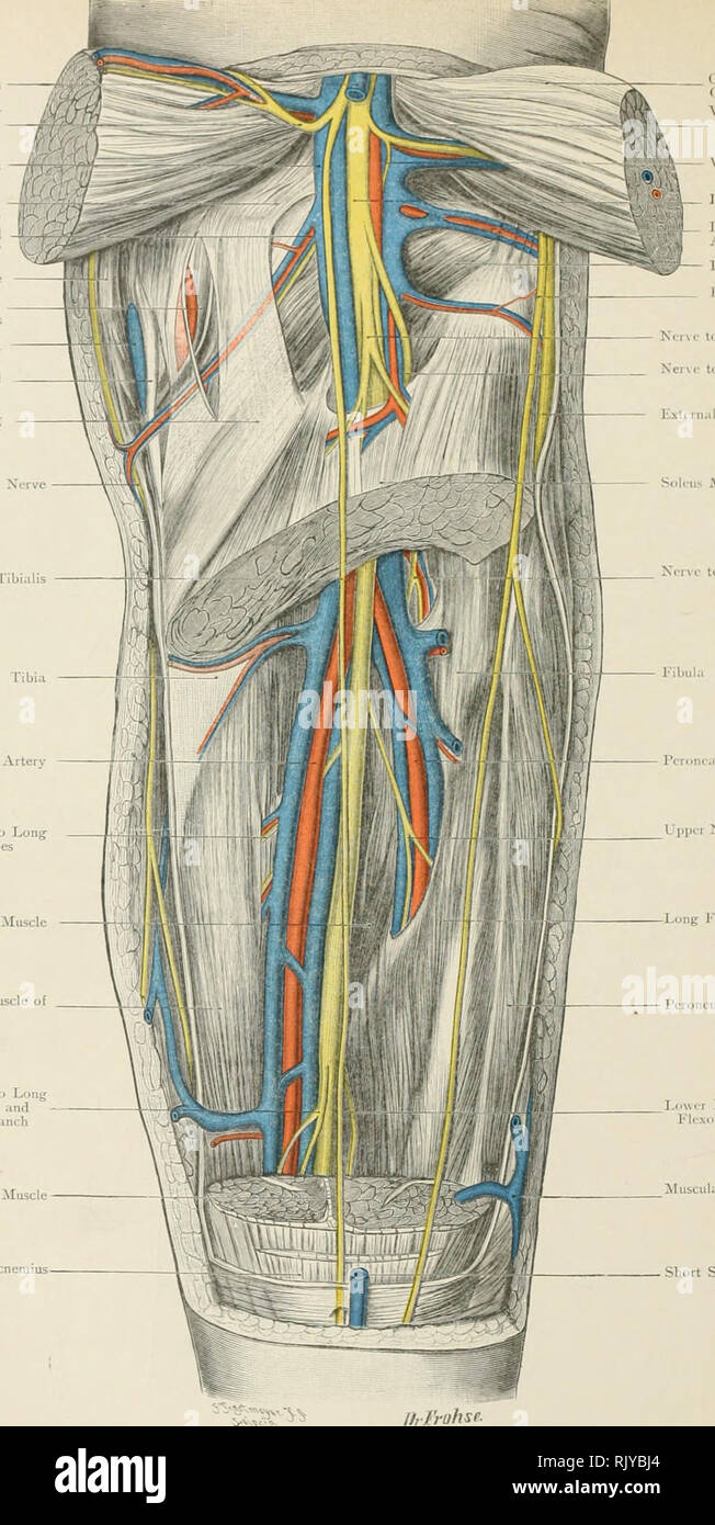 medium resolution of atlas of applied topographical human anatomy for students and practitioners anatomy