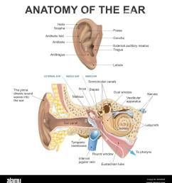the human ear consists of three parts the outer ear middle ear and inner ear [ 1245 x 1390 Pixel ]