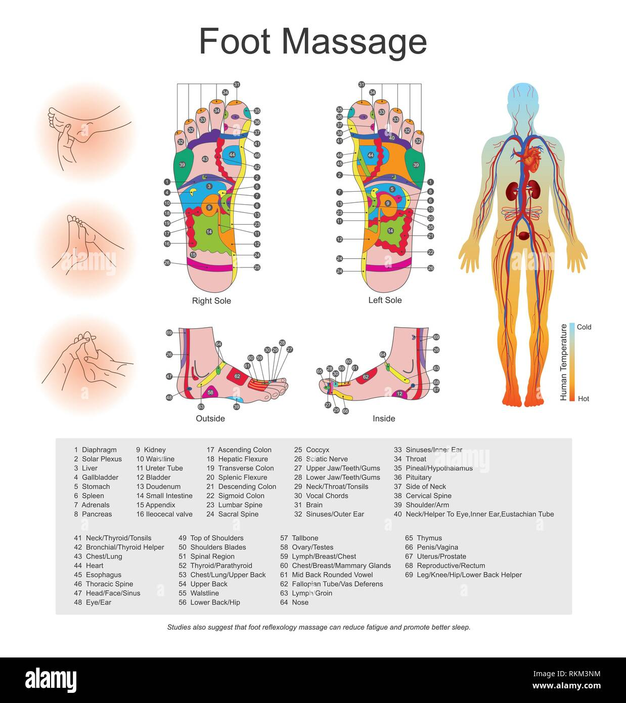 hight resolution of while various types of reflexology related massage styles focus on the feet massage of the soles of the feet is often performed purely for