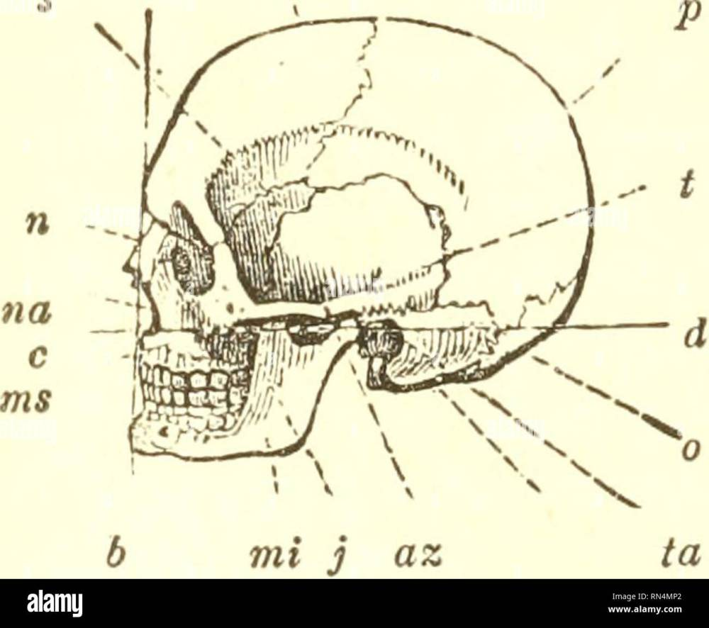 medium resolution of 464 bones of the skull 3fotor apparatus of man skeleto7i and muscles 616 before entering upon the examination of the various movements of the lower