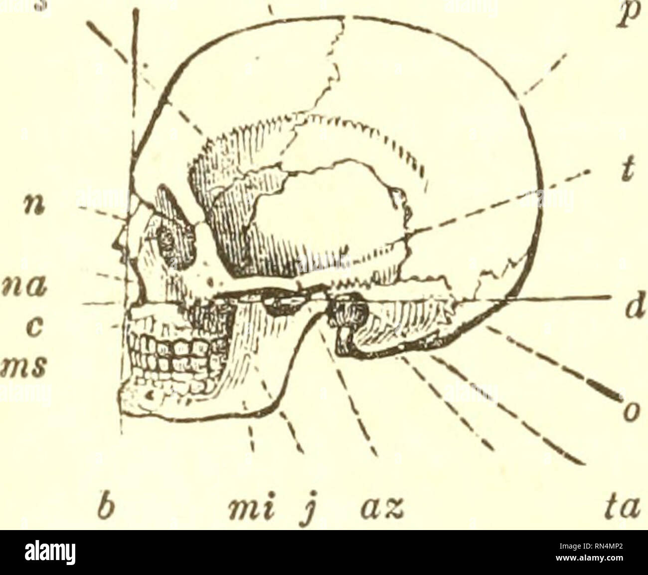 hight resolution of 464 bones of the skull 3fotor apparatus of man skeleto7i and muscles 616 before entering upon the examination of the various movements of the lower