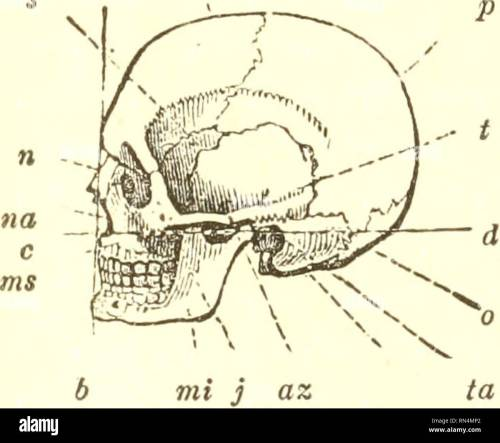small resolution of 464 bones of the skull 3fotor apparatus of man skeleto7i and muscles 616 before entering upon the examination of the various movements of the lower