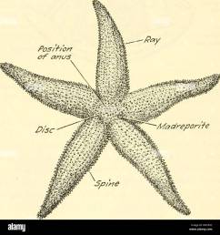 chapter xxxv starfish a type of the phylum  [ 1300 x 1379 Pixel ]