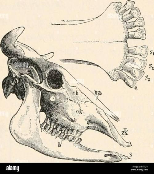small resolution of  animal biology human biology parts ii iii of first course in biology biology 194 chart of mammalian skulls