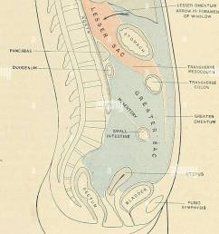 the peritoneum 1255 terior abdominal wall as the inferior layer of the transverse mesocolon ffif 995 it reaches the abdominal wall at the upper border  [ 868 x 1390 Pixel ]