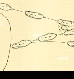 animal biology zoology biology 72 protozoa produce a swerving as a result of the combination of  [ 1300 x 890 Pixel ]