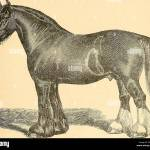 The American Farmer S Horse Book A Pictorial Cyclopedia Of Facts Concerning The Prominent Breeds Horses Horses For Labor 41 Vi The Suffolk Punch Another Famous Draft Horse Of England Is