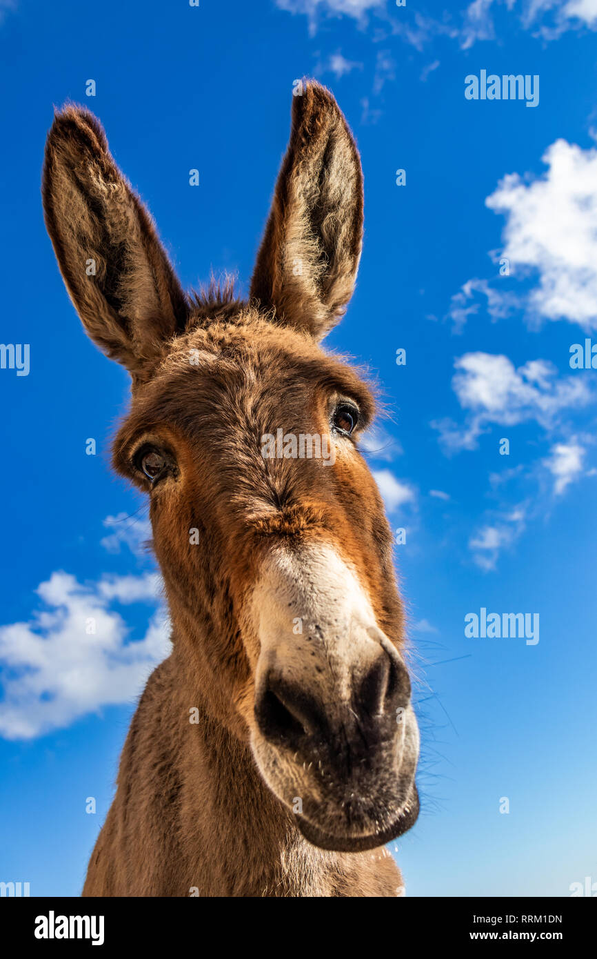 Funny Donkey Pictures : funny, donkey, pictures, Donkey, Funny, Resolution, Stock, Photography, Images, Alamy