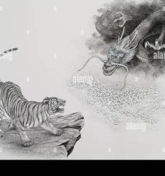 tiger and dragon illustration stock image [ 1300 x 882 Pixel ]