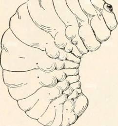 elementary entomology c1912 elementary entomology elementaryentomo00sand year c1912 a c [ 1101 x 1390 Pixel ]