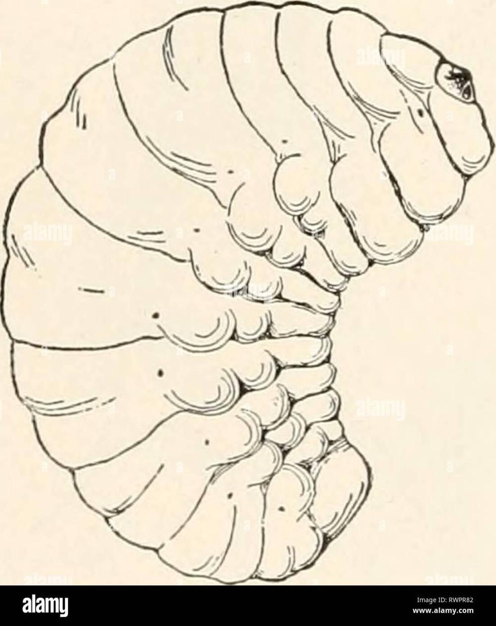 medium resolution of elementary entomology c1912 elementary entomology elementaryentomo00sand year c1912 a c
