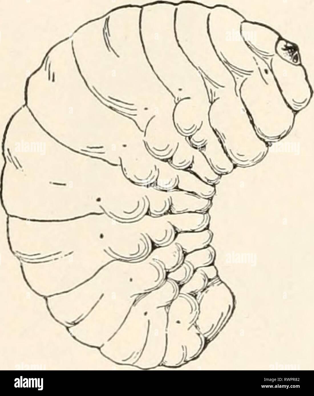 hight resolution of elementary entomology c1912 elementary entomology elementaryentomo00sand year c1912 a c