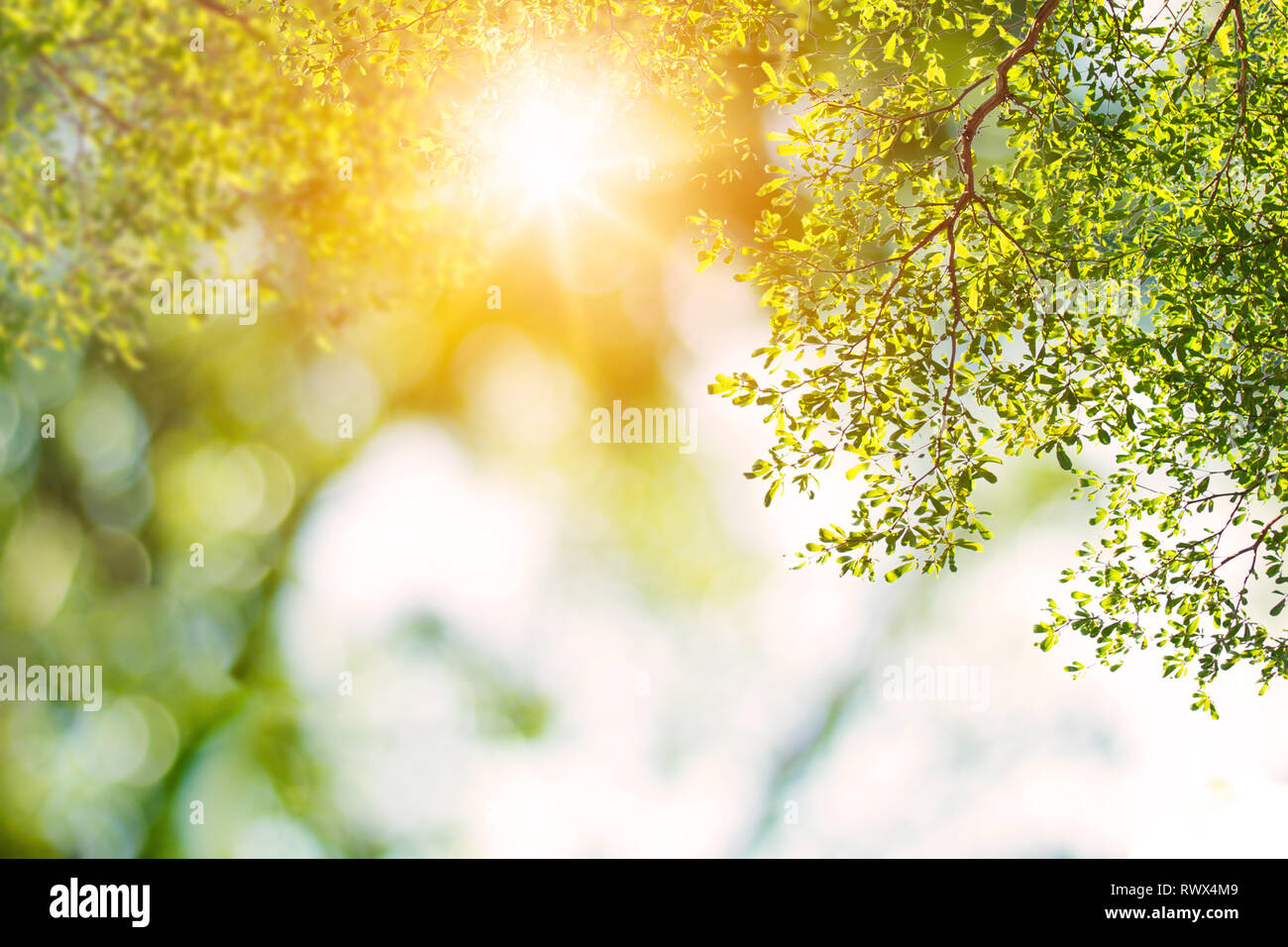 Green Nature Background With Sun Shine Stock Photo Alamy