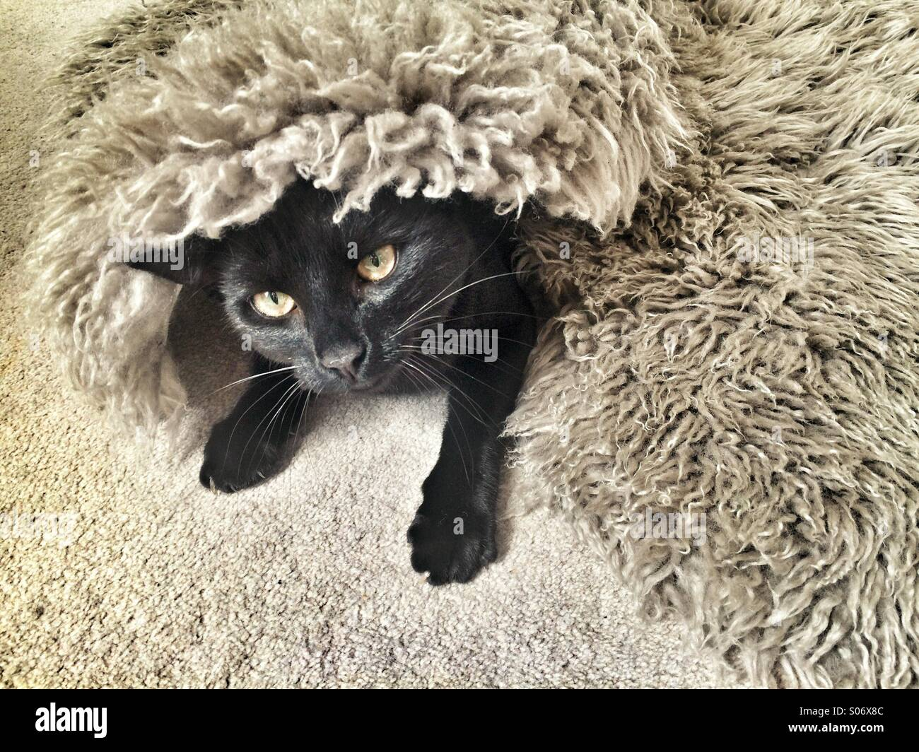 a black cat hiding