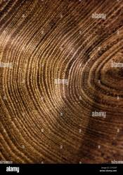 Dark Brown Wooden Background Texture Tree Rings Stock Photo Alamy