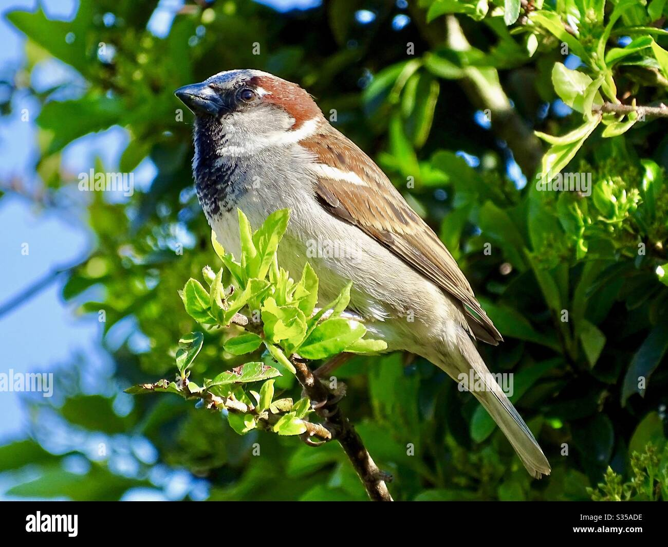 Beautiful Sparrow Bird Perched On A Tree Branch In The Spring Sunshine Stock Photo Alamy