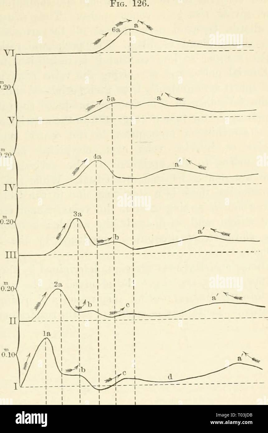 medium resolution of elements of human physiology elementsofhumanp05star year 1907 the vascular mechanism 231 sovwaaaarvana v