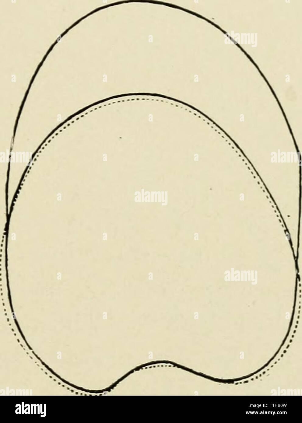 hight resolution of apex occipital diagram best wiring diagram apex occipital diagram