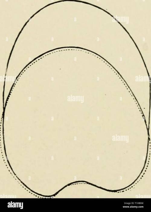 small resolution of apex occipital diagram best wiring diagram apex occipital diagram