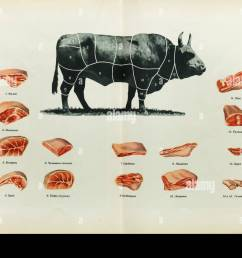 russian beef cuts depicted in the colour illustration in the book of tasty and healthy food [ 1300 x 962 Pixel ]