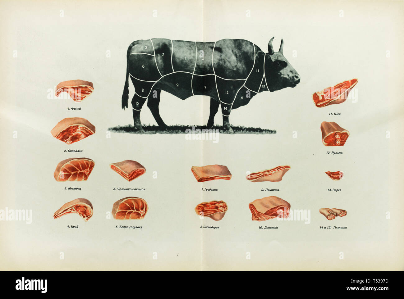 hight resolution of russian beef cuts depicted in the colour illustration in the book of tasty and healthy food
