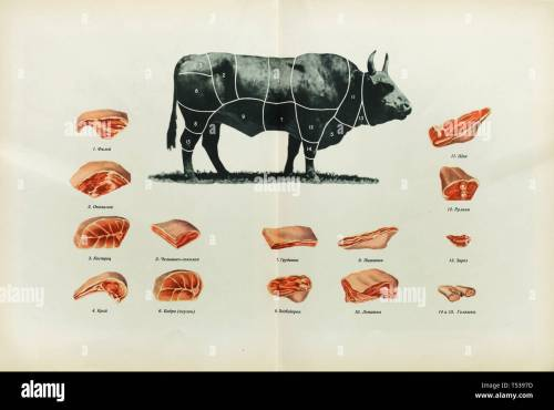 small resolution of russian beef cuts depicted in the colour illustration in the book of tasty and healthy food