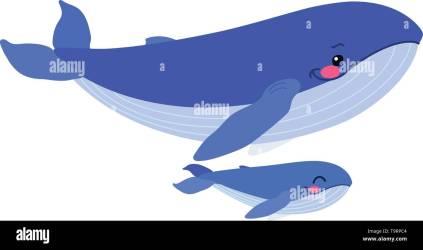 vector flat cartoon animal clip art blue whales family Stock Vector Image & Art Alamy