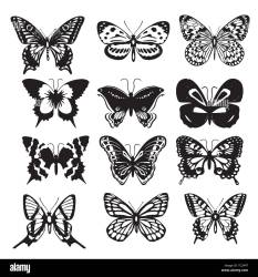 insect butterfly outline vector nature coloring book insect butterfly outline vector nature coloring book Butterfly silhouette icons set Vector Ill Stock Vector Image & Art Alamy