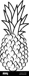 Ripe Pineapple Black and White Stock Photos & Images Alamy
