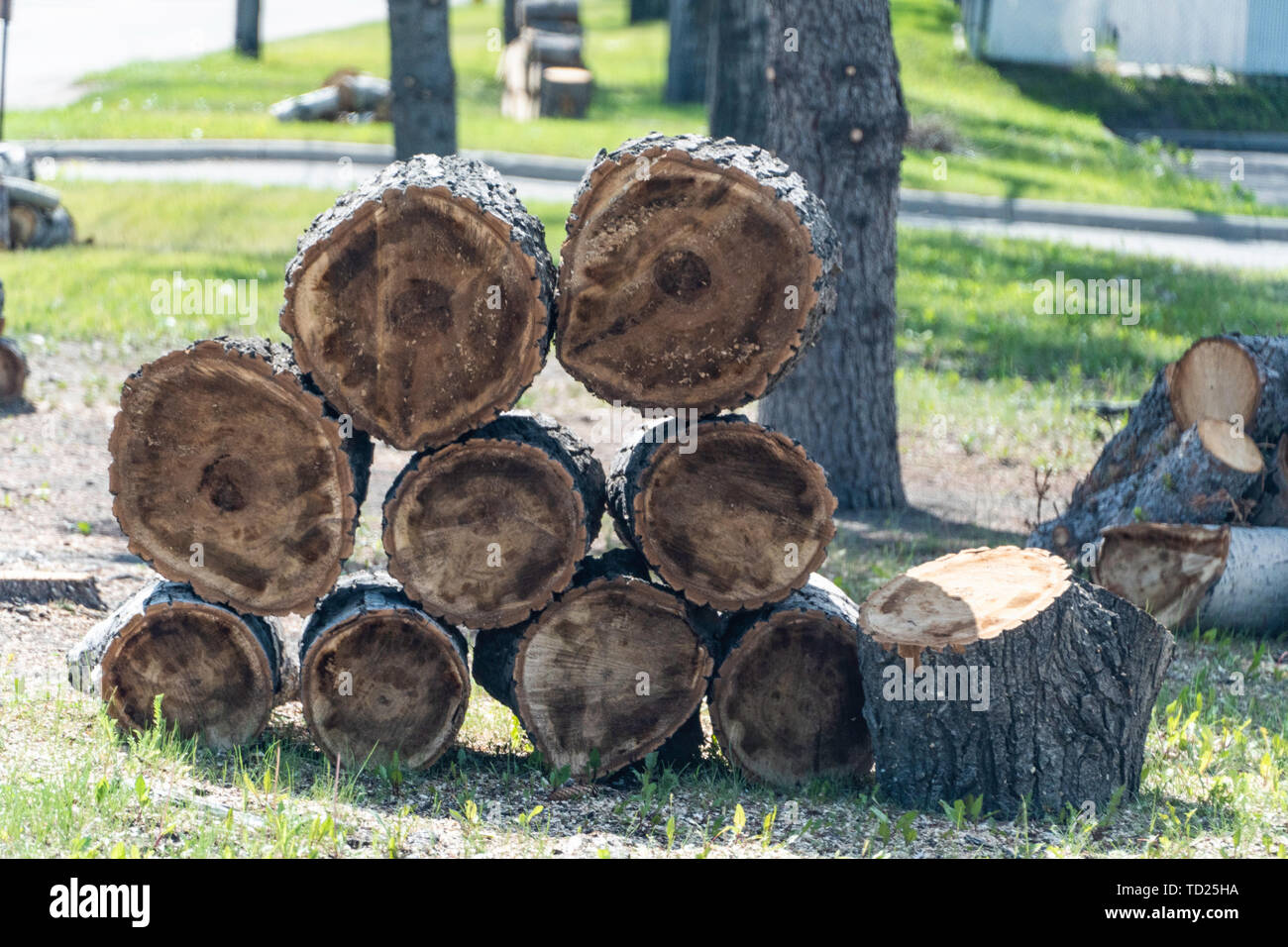 stacks of cut tree