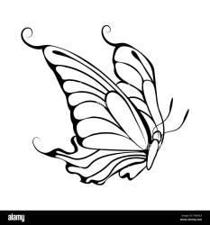 Sketch of Butterfly Outline Design Vector Illustration Stock Vector Image & Art Alamy