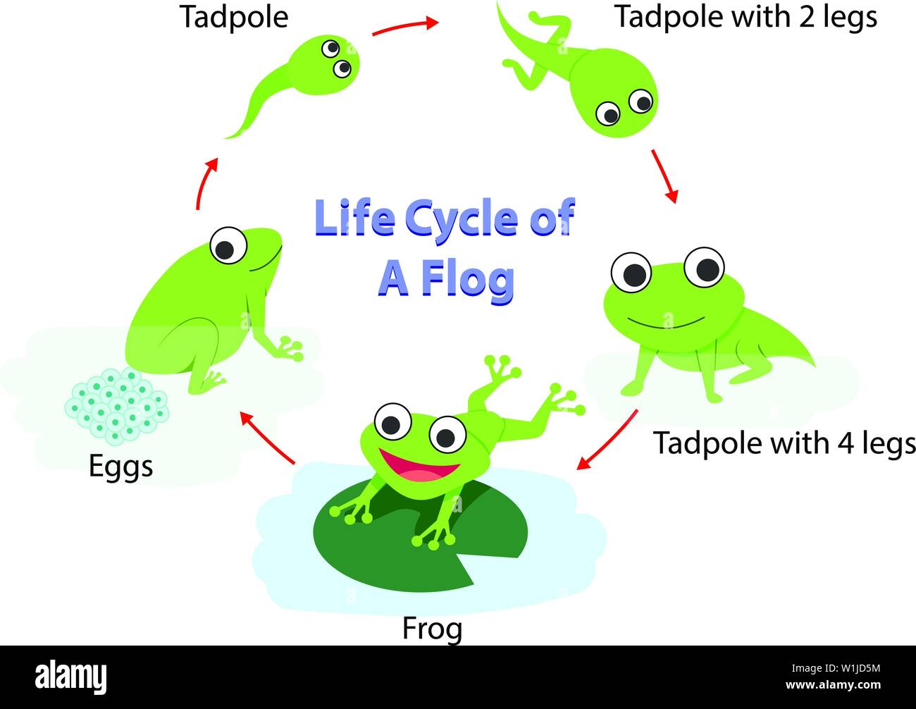 Life Cycle Stock Vector Images