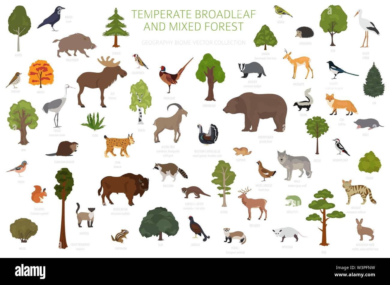 Forests contain the overwhelming majority of life on earth, including a staggering 80% of the planet's terrestrial species. Temperate Broadleaf Forest And Mixed Forest Biome Terrestrial Ecosystem World Map Animals Birds And Plants Graphic Design Vector Illustration Stock Vector Image Art Alamy