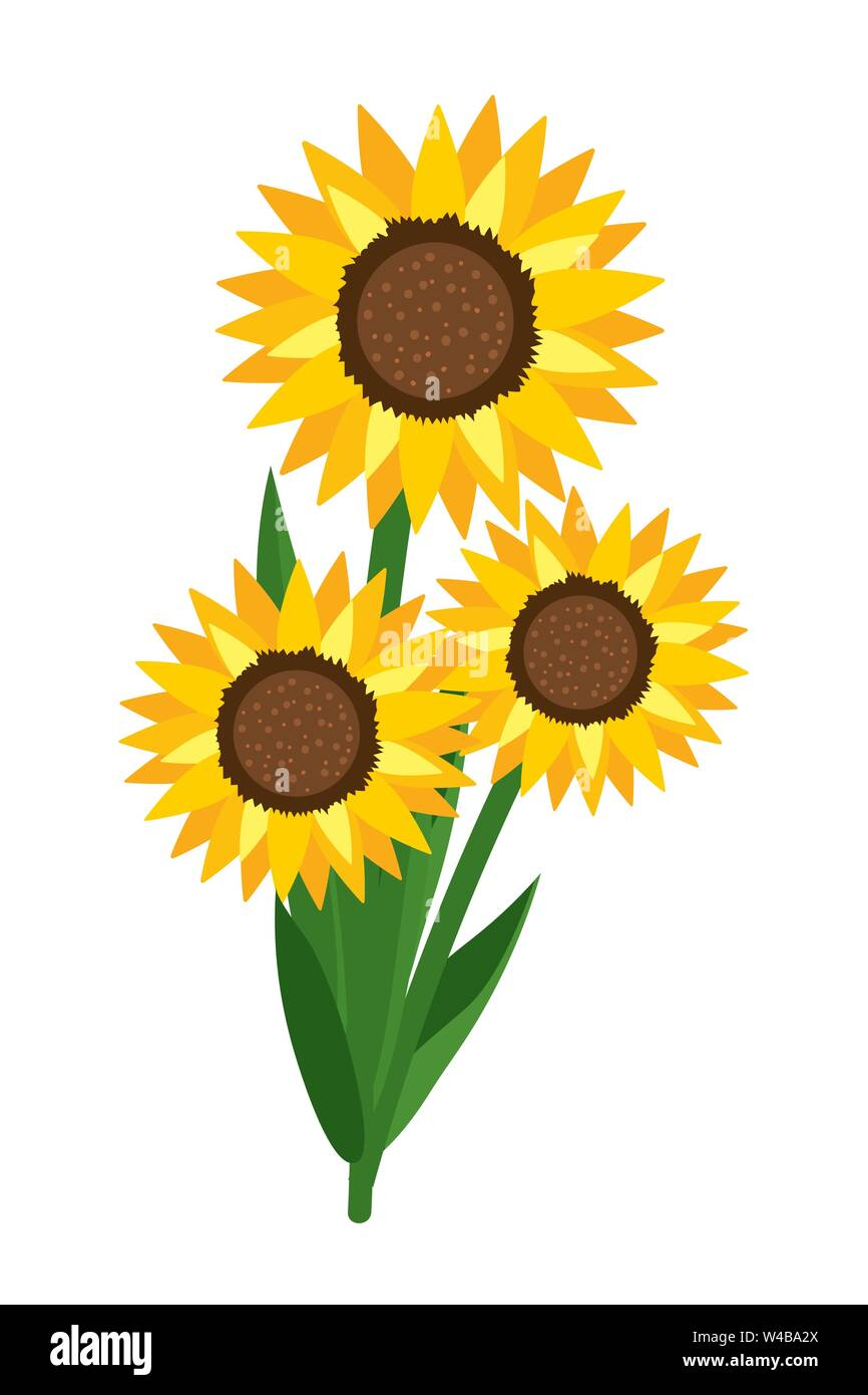 Sunflower Cartoon Drawing : sunflower, cartoon, drawing, Cartoon, Sunflower, Resolution, Stock, Photography, Images, Alamy