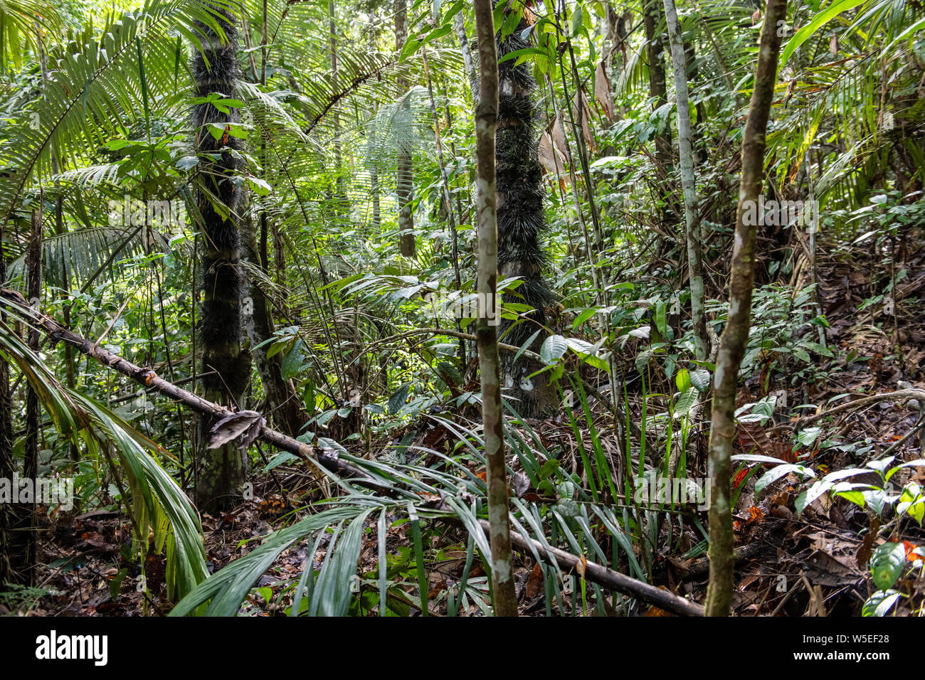 Find the perfect equatorial forest stock photo. Equatorial Forest High Resolution Stock Photography And Images Alamy