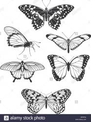 Beautiful stylised butterfly outline silhouettes Stock Vector Image & Art Alamy