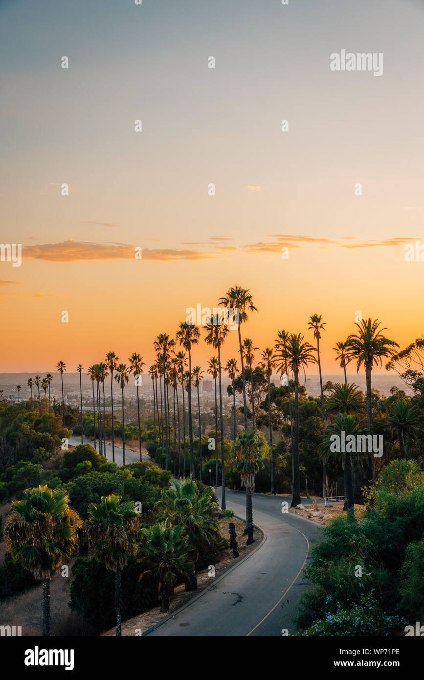 Coucher De Soleil Los Angeles : coucher, soleil, angeles, Trees, Sunset,, Elysian, Park,, Angeles,, California, Stock, Photo, Alamy