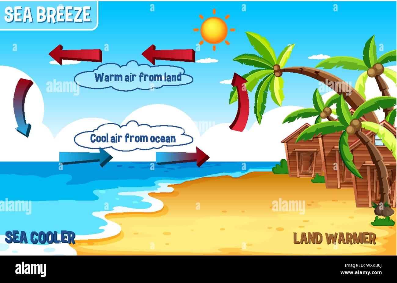 Diagram Sea Breeze Science