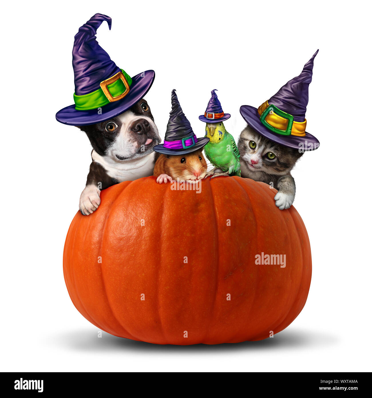 21/09/2020· we've curated 15 of our favorite cat and dog halloween costumes of 2020, including yoda, superman, and the notorious rbg. Pet Halloween Symbol As A Group Of Pets As A Dog Cat Bird And Hamster Dressed In Holiday Costumes Sitting On A Pumpkin With 3d Illustration Elements Stock Photo Alamy