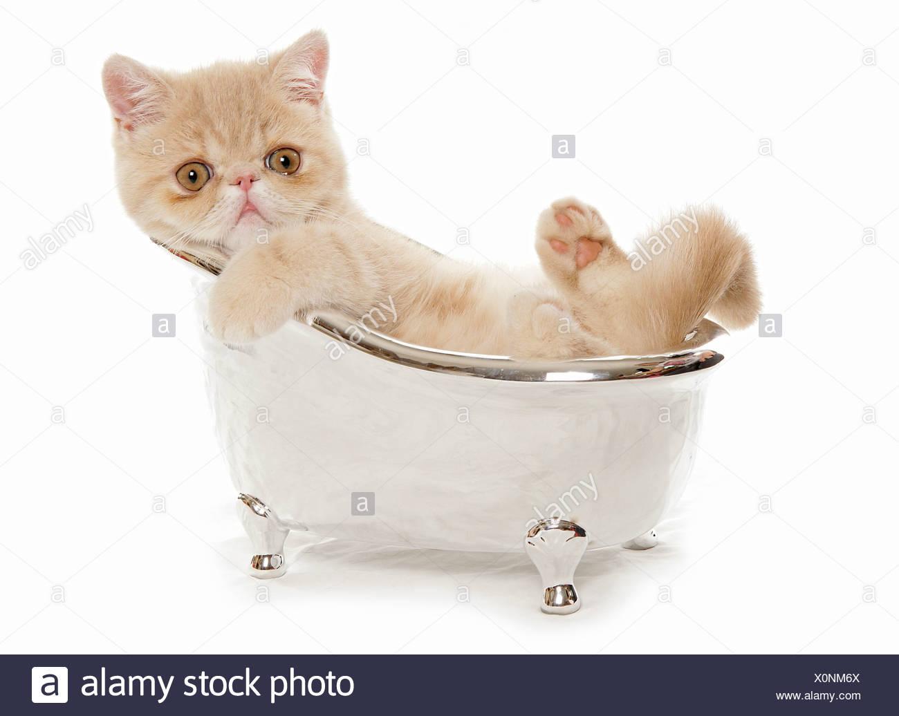 cat bath tub stock