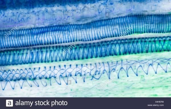 Plant Cell Wall Stock &