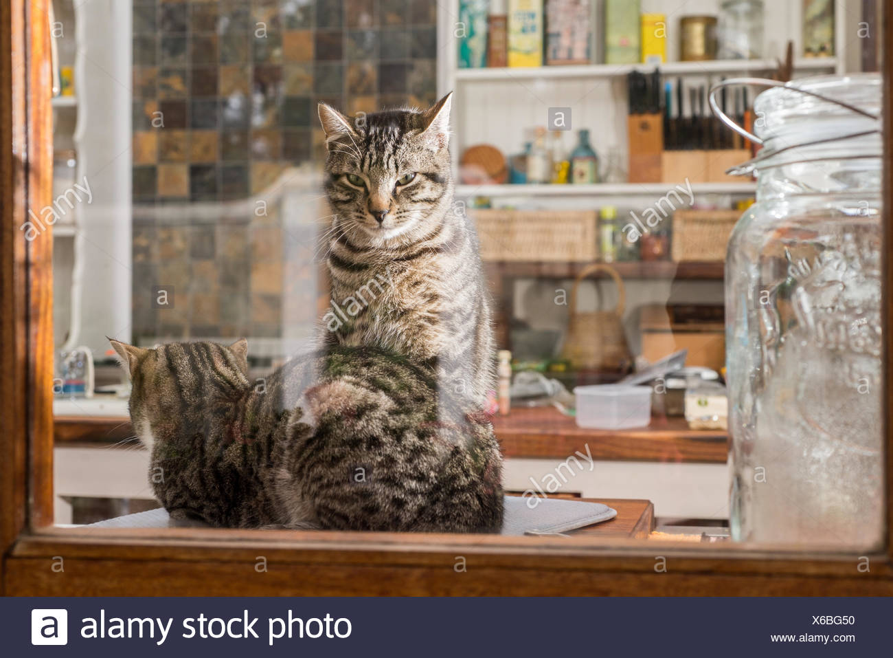 cats in the kitchen garden window two stock photo 279307980 alamy