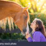 Arabian Horse Woman Wearing Western Outfit Smoothing With A Chestnut Stallion In A Paddock Austria Stock Photo Alamy