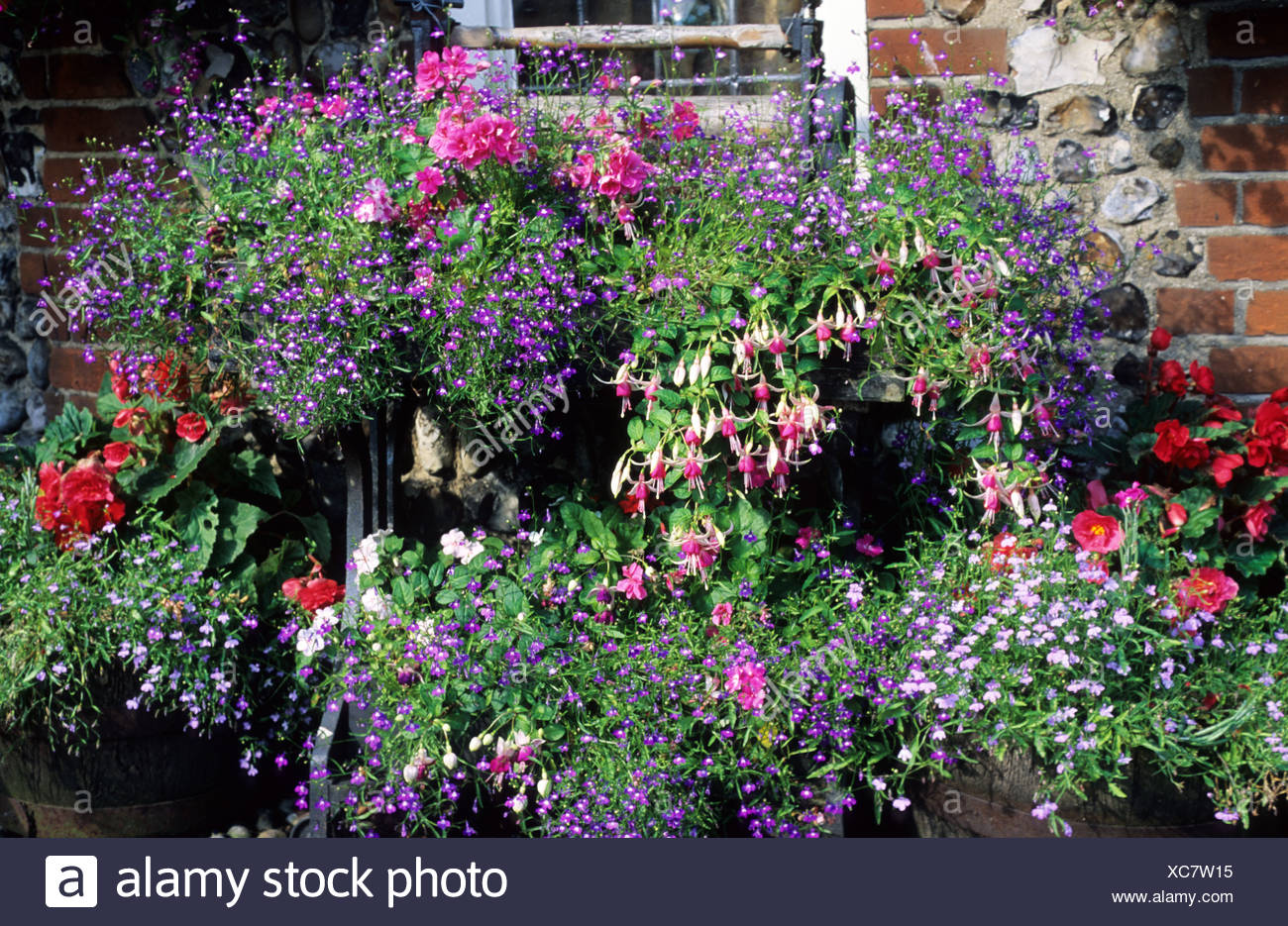 https www alamy com container plants fuchsia begonia on antique mangle stand pots planters patio garden image282915057 html