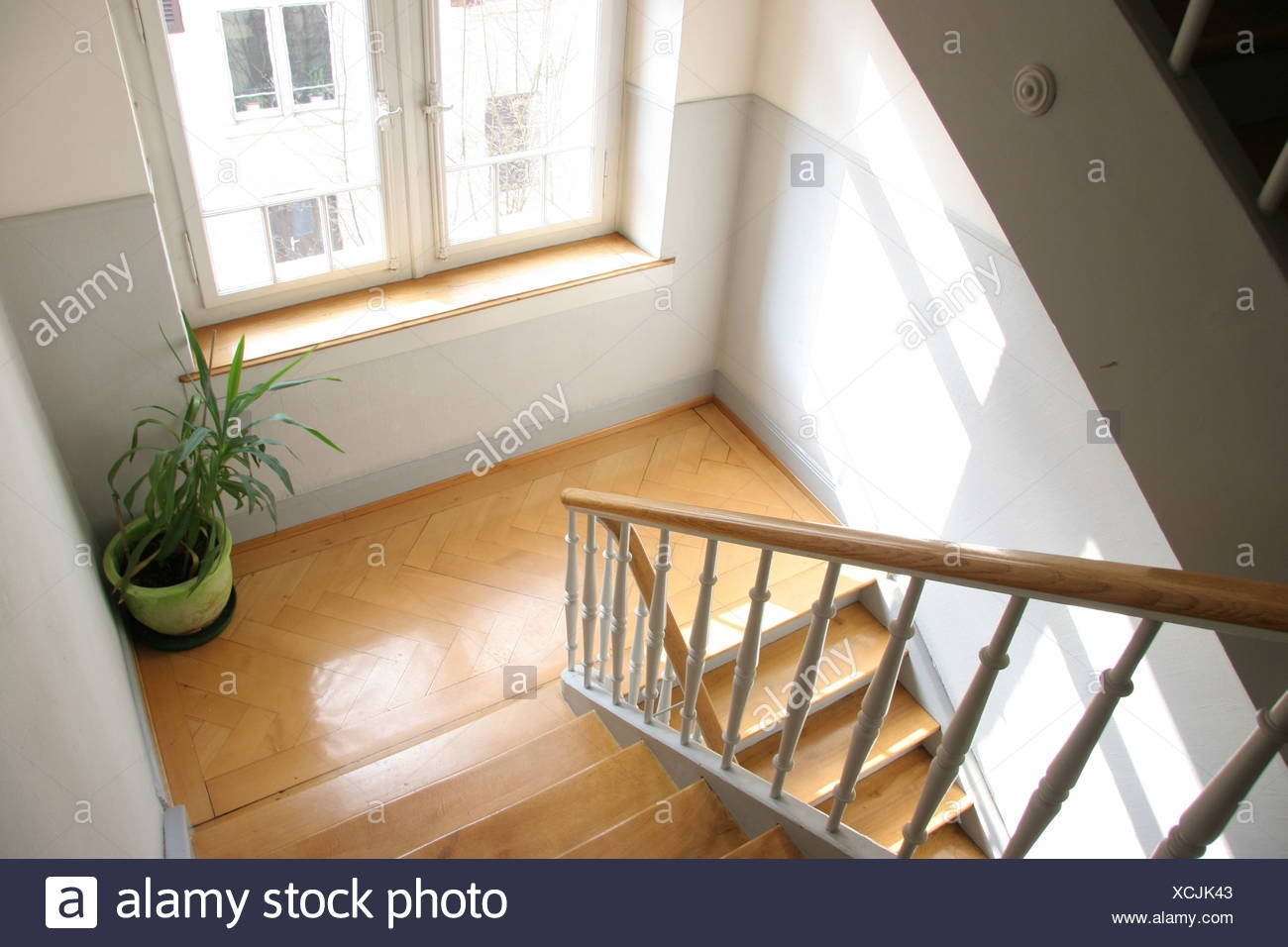 Bottom Ground Grounds Home House Houses Inside Plant Railing Stair   Railings Stairs Inside House   Wood   Cable Railing Systems   Deck Railing   Glass Railing Ideas   Banister